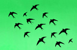 Silhouettes of many swallows - 215204842