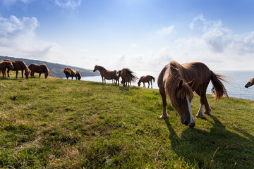 Mares in the mountains