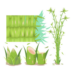 Bamboo Tree Isolate Collection Set Vector © kirati