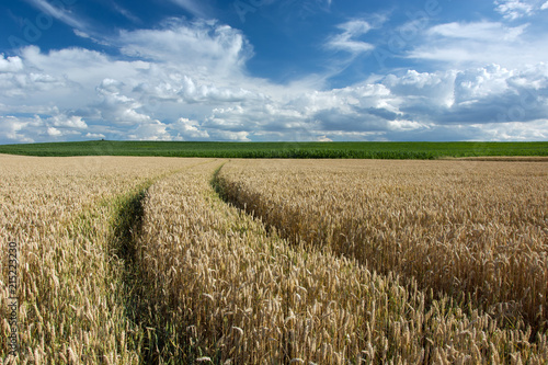 Wheat tracks and clouds in the sky