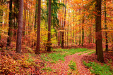Wonderful forest in the autumn full of red leaves, Poland