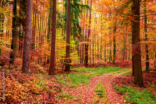 Foto Murales Wonderful forest in the autumn full of red leaves, Poland