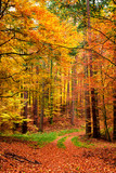 Yellow and green path in the autumn forest, Poland - 215240687