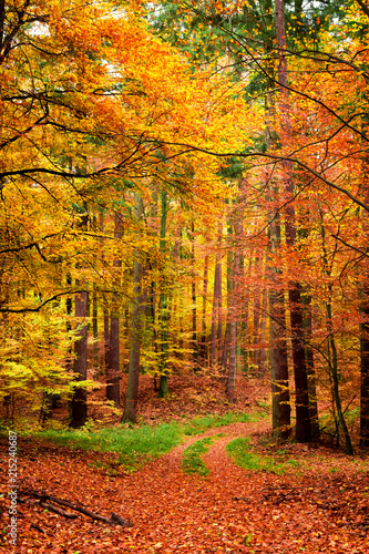 Fotobehang Oranje Yellow and green path in the autumn forest, Poland