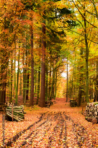 Foto Spatwand Honing Chopped wood in the forest on an autumn path