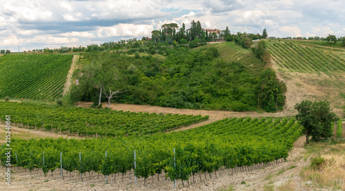 Foto Spatwand Wijngaard Vineyards and olive groves in Italy's Tuscany province.