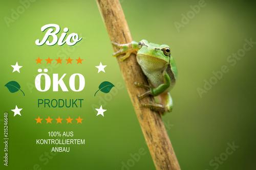 Foto Spatwand Kikker Frosch Bio Ökoprodukt Landwirtschaft