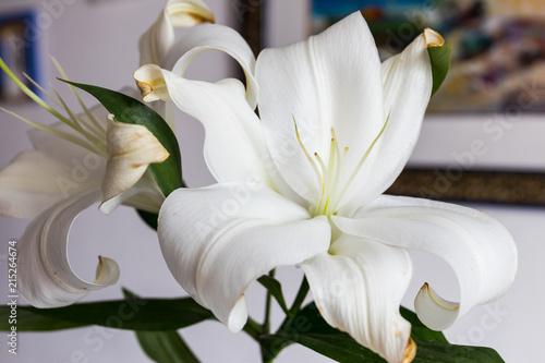 Canvas Iris Lirium (azucena)