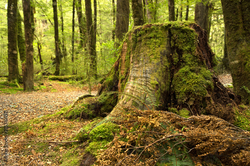 Canvas Betoverde Bos Old tree stump full of moss