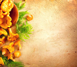 Raw wild chanterelle mushrooms on old rustic table background. Organic fresh chanterelles background. Soft focus - 215350400