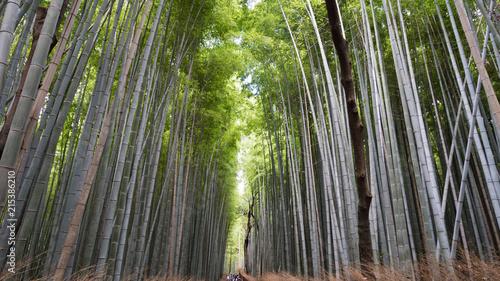 Aluminium Bamboe 京都嵐山