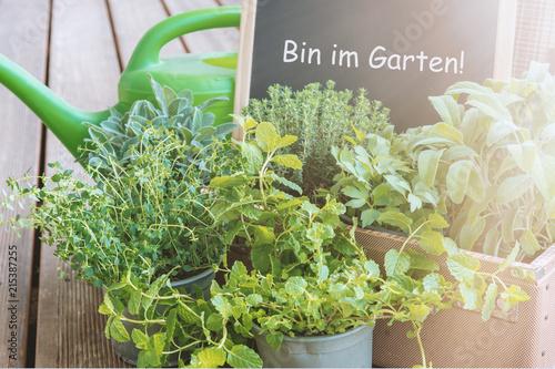 Schild: bin im Garten mit Kräutertöpfen