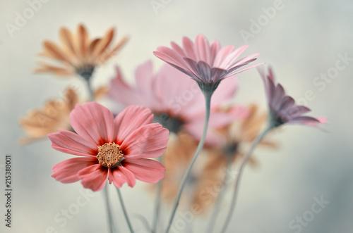 Fototapety, obrazy : Bukiet pastelowych kwiatów