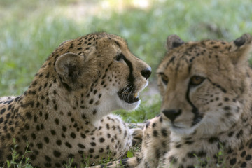 beautiful wild animals in safari