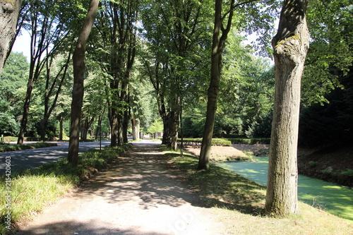 Foto Spatwand Olijf park