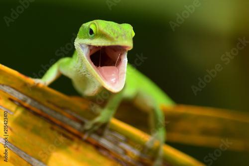 Plexiglas Kameleon Yelling Lizard