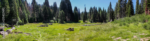 Panoramic view of lush meadow in Big Stump Basin Sequoia National Park - 215437492