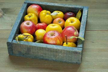 Apples, quinces
