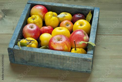 Leinwanddruck Bild Apples, quinces