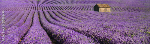 provence lavendel © Igor