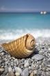 Leinwandbild Motiv Wunderschöner mediterraner Kiesstrand mit einem Boot und einem Muschel im Vordergrund
