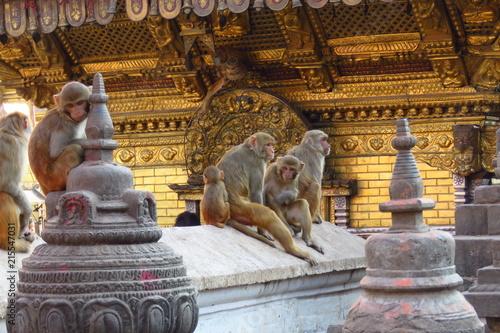 Foto Spatwand Aap Monkeys at the Swaymbhunath stupa, aka Monkey Temple, Kathmandu, Nepal