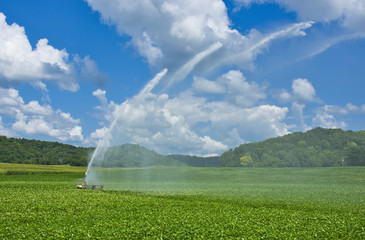Agricultural Irrigation in High Summer