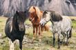 Leinwanddruck Bild - Iceland horse travel landscape - icelandic horses in nature.