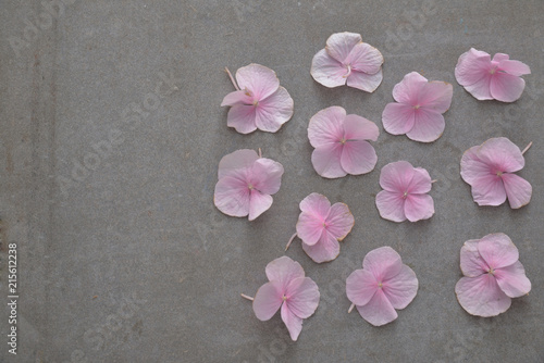 Plexiglas Spa Many Pink hydrangea petals on gray background