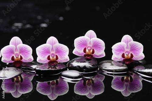 Spa still life with wet pebbles and four orchid reflection