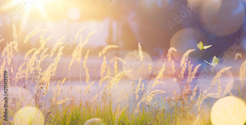 Fotobehang Natuur Art abstract September sunny autumn meadow background