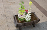 Niigata, Japan, Flower decoration of the city streets. The love of flowers in Japan is simply extraordinary. - 215620416