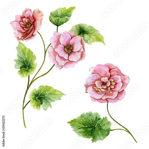 Beautiful botanic set (pink briar flowers with leaves).  Rosehip twigs and isolated on white background. Watercolor painting. © katiko2016