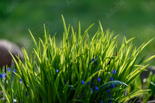 Beautiful green lawn freshly mowed
