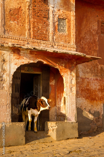 Foto Murales A cow coming out of an old building that looks like a temple    Jaipu