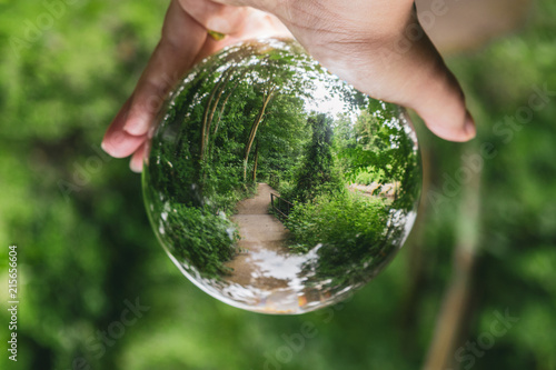 Foto Murales Photo of a hand holding the forest inside a crystal ball
