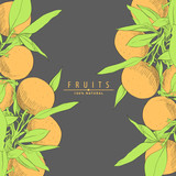 fresh oranges illustration