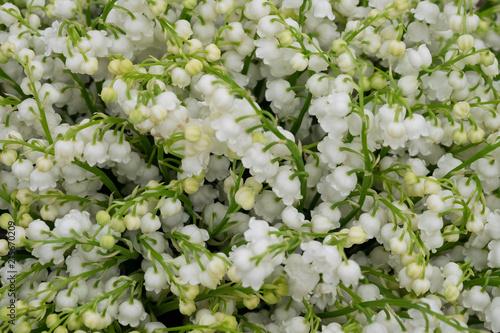 Foto Spatwand Lelietjes van dalen Ландыши садовые