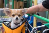 müder Hund im Einkaufswagen
