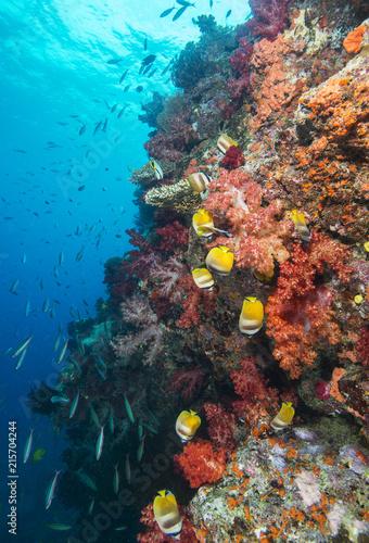Foto Murales Yellow fish swim down colorful reef wall