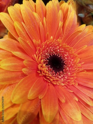 Foto Spatwand Gerbera Nature of the Pacific Northwest