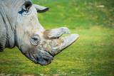Big rhino in the zoo - 215721688