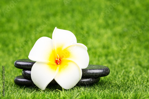 Plexiglas Plumeria Plumeria flower and black stones on green grass background