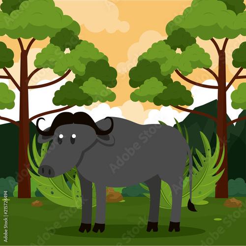 Poster Buffalo wild animal at jungle cartoons vector illustration graphic design