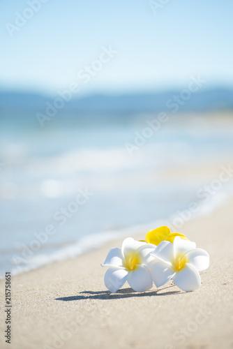 Foto Spatwand Plumeria 砂浜とプルメリア