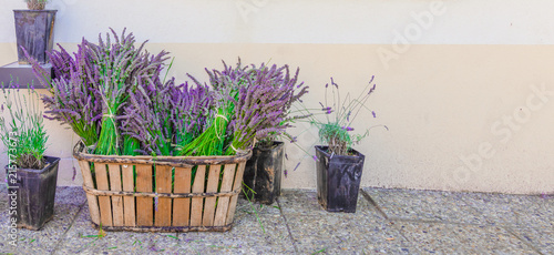 Foto Spatwand Lavendel Bunch of lavender flowers in a rustic wooden basket, plants in pot with fresh lavender on the floor. Decoration at shop in Valensole, Provence, France.