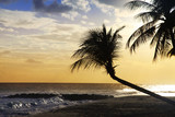 View of nice tropical beach with palm on sunset. Barbados - 215798096