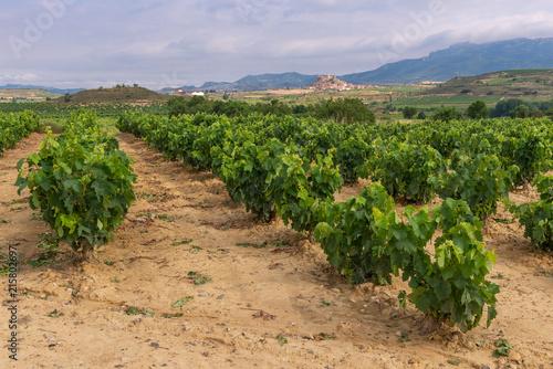 Foto Spatwand Wijngaard Vineyard with San Vicente de la Sonsierra as background, La Rioja, Spain