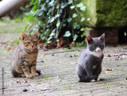 Foto Spatwand Kat Zwei Katzenbabys mit schönen Fellzeichnungen