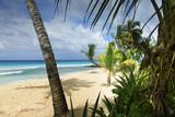 tropical beach - 215806205